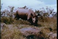 Rhino running through the wilds of Africa Stock Footage