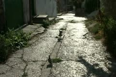 A few steps to the old street. - stock footage
