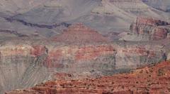 California Condor in the Grand Canyon. Arizona, USA. Stock Footage