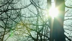 Lens Flare trees Stock Footage
