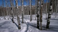 Aspen Forest Snowshoe Stock Footage