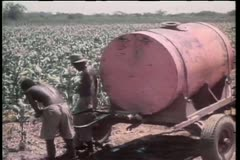Workers tending to crops in Africa Stock Footage