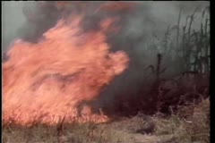 Men trying to extinguish fire in African field Stock Footage