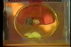 Mouse running on exercise wheel Stock Footage