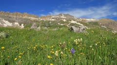 Wildflower High Country Stock Footage