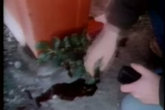 Close-up of hand touching pool of  blood on ground Stock Footage