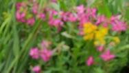 Alpine Bouquet Stock Footage