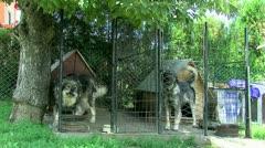Sheperd Dog Stock Footage