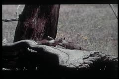 Two affectionate squirrels playing in wilderness Stock Footage