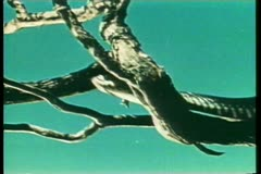 Snake crawling on branch Stock Footage
