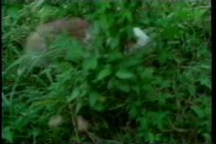 Rabbit running in grass Stock Footage