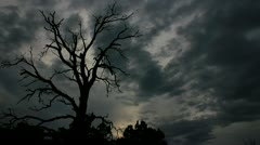 Scary looking dead tree with awesome sky as background Stock Footage