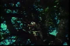 Barbarian shooting a burning arrow from a tree Stock Footage