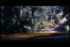 Driver point of view shot of forest road Stock Footage