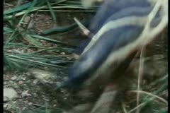 Close-up of injured feet after stepping on spikes Stock Footage