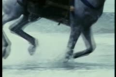 Close-up of horse running through water on seashore Stock Footage