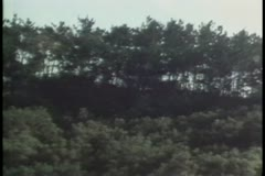 Zoom out shot of lush foliage Stock Footage