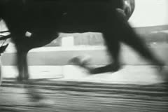 Close-up of horse trotting in harness race - stock footage