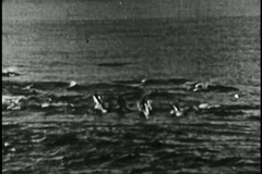 Wide shot of school of dolphin in the ocean Stock Footage
