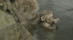 Mummy & baby monkey together relaxing in a natural hot-spring, Jigokudani, Japan Stock Footage