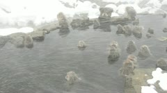 Snow monkeys taking shelter from a snow storm by relaxing in a natural hotspring - stock footage