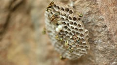Wasp Nest _3 Stock Footage