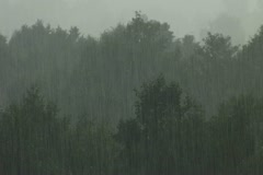 Summer rain in the forest 1 Stock Footage