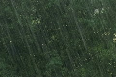 Summer rain in the forest 2 Stock Footage