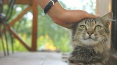 Patting cat Stock Footage