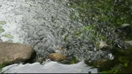 Stock Video Footage of Little stream.