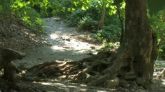 Tree With Twisted Roots and Path Stock Footage