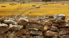 Stock Video Footage of Dried wheat grass in Formentera Balearic island from masonry dry branches