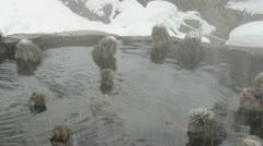 Group of snow monkeys relaxing in a natural hot-spring, Jigokudani, Nagano Japan Stock Footage