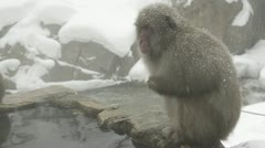 Boss snow monkey sitting in the cold, Jigokudani, Nagano, Japan. - stock footage