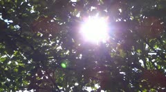 Sunlight shining through the leaves of the tree - stock footage