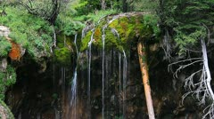 Gorgeous waterfall with colorful moss and rocks and shrubs Stock Footage