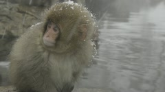 Baby snow monkey sitting in the cold closeup, Jigokudani, Nagano, Japan. Stock Footage