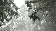 Tree tops covered in a heavy layer of snow in Jigokudani, Nagano, Japan. Stock Footage