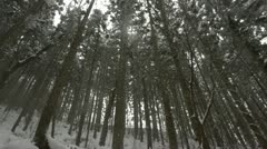 Panning shot of tree tops covered in a heavy layer of snow in Jigokudani, Japan. Stock Footage