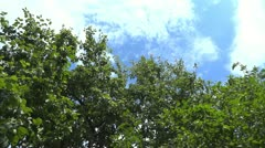 Wind shakes the tree branch Stock Footage