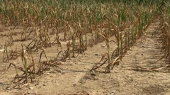 Drought conditions in farm field - stock footage