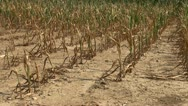 Stock Video Footage of Drought conditions in farm field
