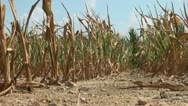 Drought conditions in farm field Stock Footage