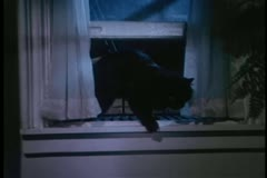 Black cat climbing through open window - stock footage