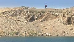 Sheep and goats drinking water Stock Footage