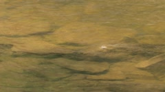 Murky River Rocks Stock Footage