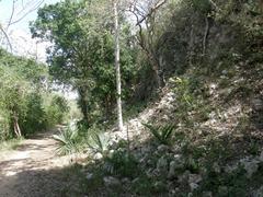 Ek Balam,unexplored area , Mayan Ruins, Yucatan, Mexico Stock Photos