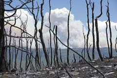 Wild fire smoke through burned trees 0988 Stock Photos