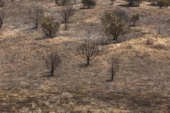 Wildfire mountain total destroyed 0901 - stock photo