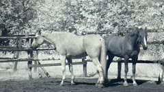 Infrared fauna: horses in paddock 2 Stock Footage